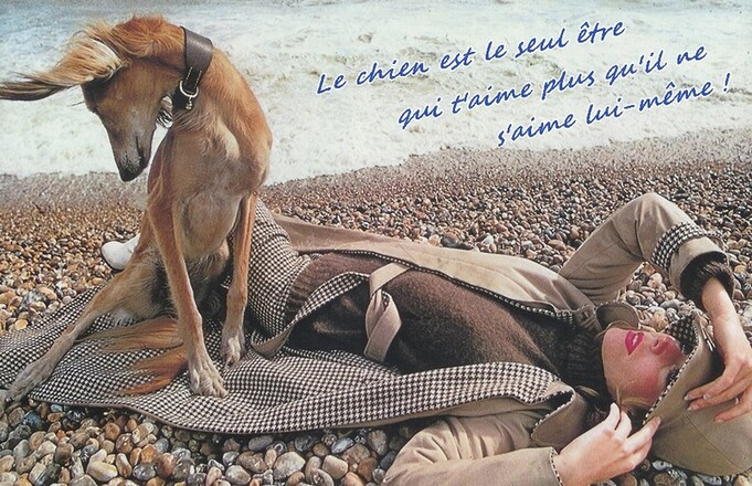 vraie vie de chien ...