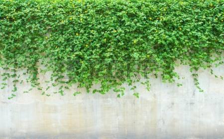 plantes ornementales sur le mur