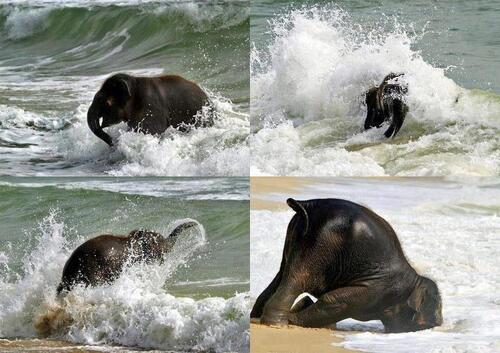 Les animaux aussi ont de l'humour !