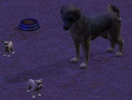 (Larans Dogs):15ième génération !