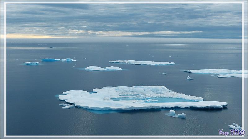 Navigation dans la Mer de Beaufort - Rencontre avec de la banquise en débâcle ... et des ours polaires - Nunavut - Canada