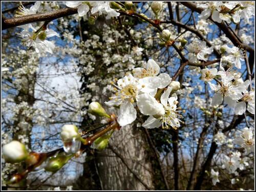 Nature Un avant-goût de printemps