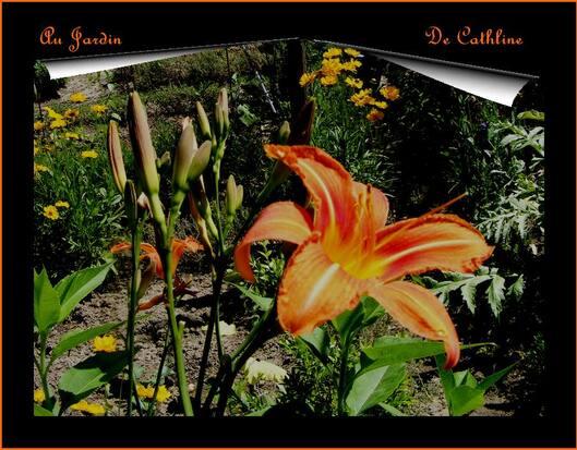 "Jardiner avec la lune ""du 1er au 10 Juin"""