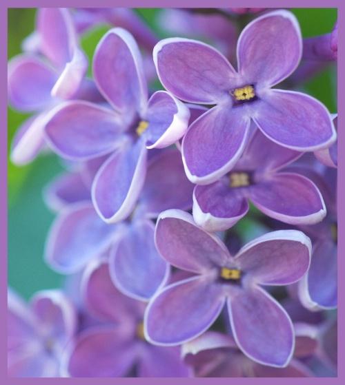 Une fleur pour greenye