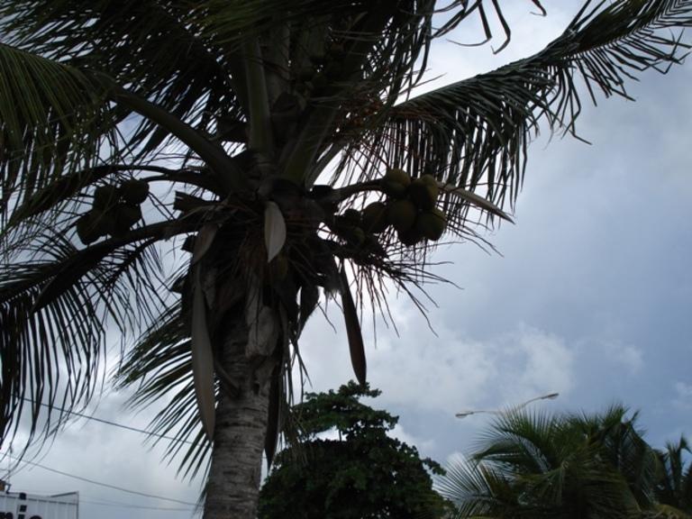 L'arbre du voyageur etc...