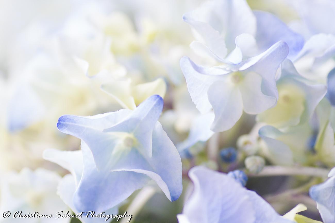 Le printemps autrement  (2)