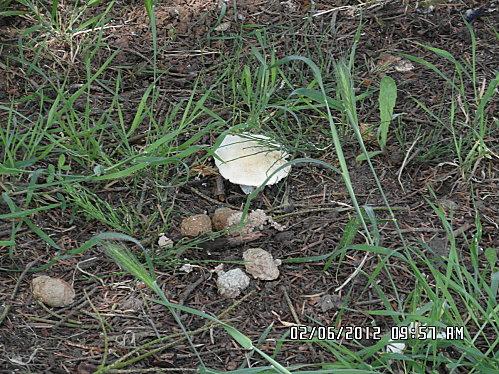 fleurs-et-champignon-006.JPG