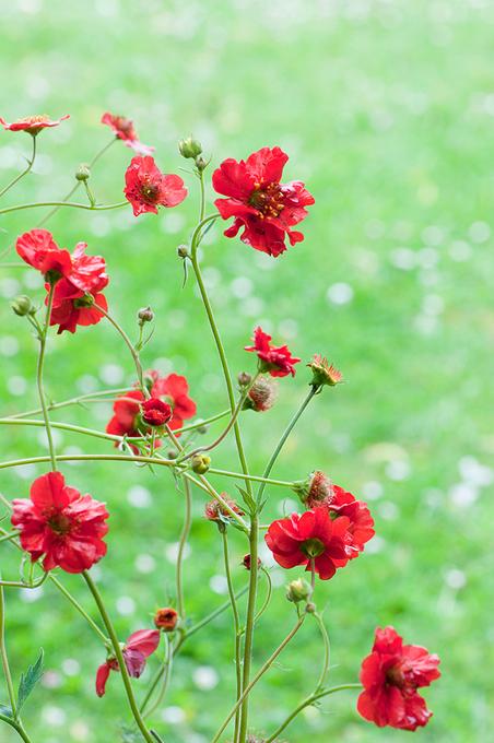 Les fleurs ...