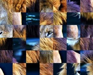 Jouer à King of jungle puzzle