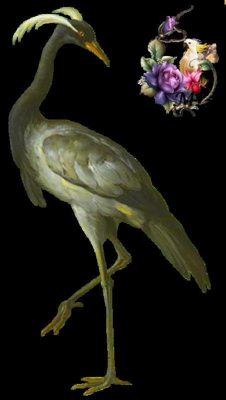 oiseau héron