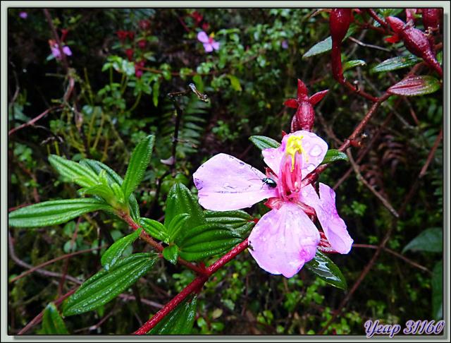Blog de images-du-pays-des-ours : Images du Pays des Ours (et d'ailleurs ...), Fleur de montagne - Costa Rica