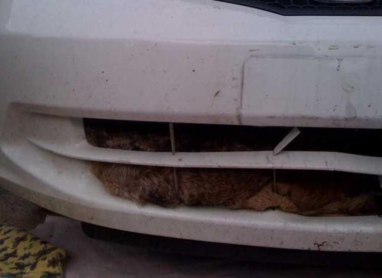 """1 coyote dans le """"moteur"""""""