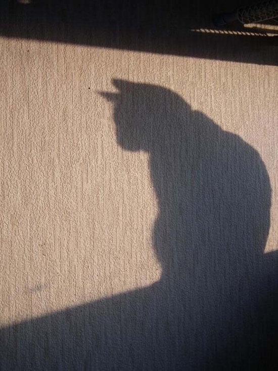 photo-ombre-chat-720x960