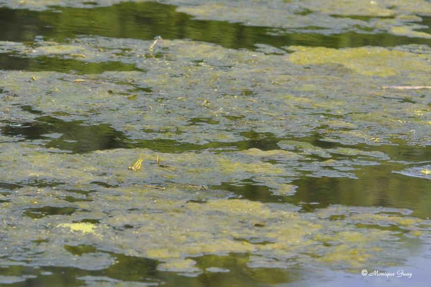 grenouille-1127.jpg
