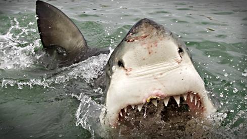 Dans la gueule du requin