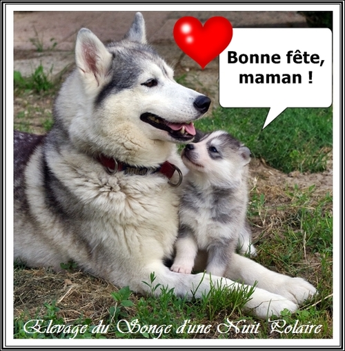 Bonne fête, maman (Husky) ! (29 mai 2016)