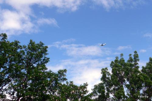 Le ciel au dessus des arbres