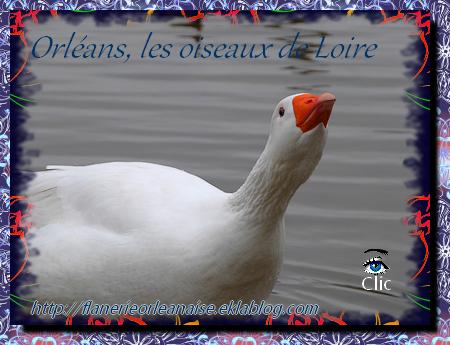 Orléans, les oiseaux de Loire