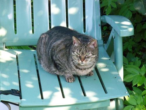 TIGROU, le chat de mon amie Roselyne....