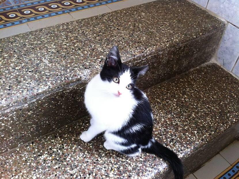 Chat à l'adoption - photos du 04/10/13