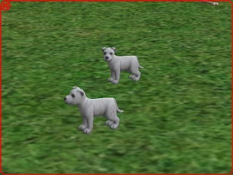 """Sims 2: Expérience 'Croisements canins"""" (2ième partie)"""