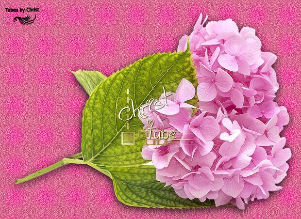 Tête D'Hortensia . Tube Fleur
