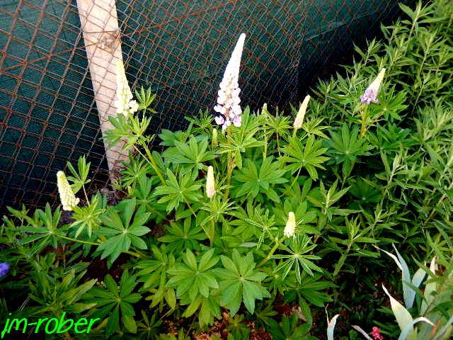 Mon jardin au mois de Mai