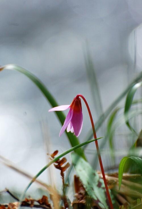 fleur des bois