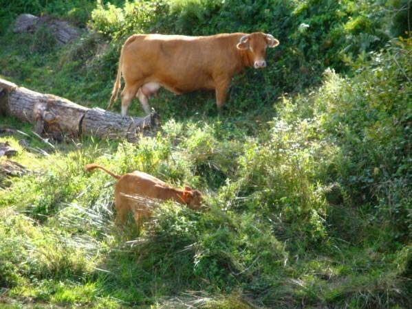Le Dorat (Limousin)