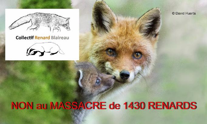 Pétition : NON au MASSACRE de 1430 renards en Seine-Maritime!