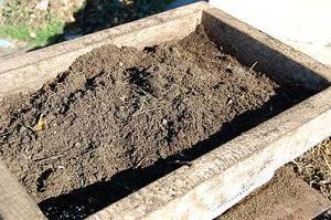 compost--1-.JPG