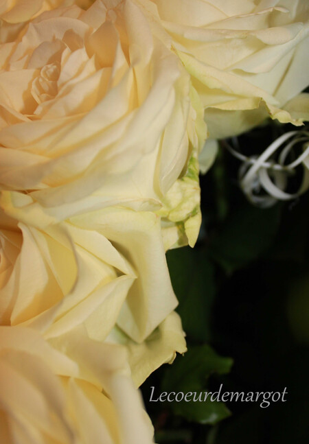 Ces roses blanches que j'adore
