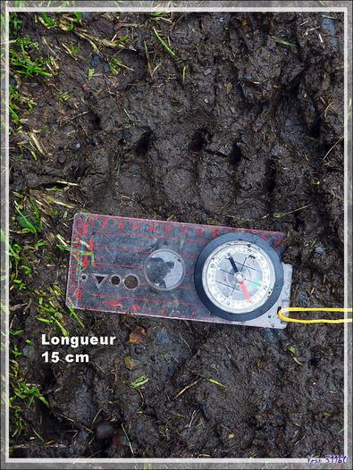 Sur la piste des ours - Melles - 31 - Occitanie