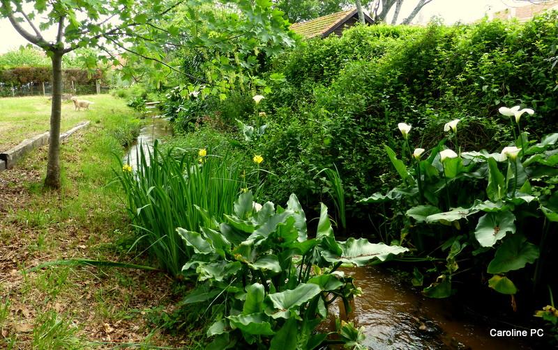 Promenade au ruisseau du rampeau
