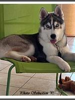 Neïko (4,5 mois)