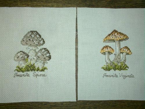 La saison des champignons
