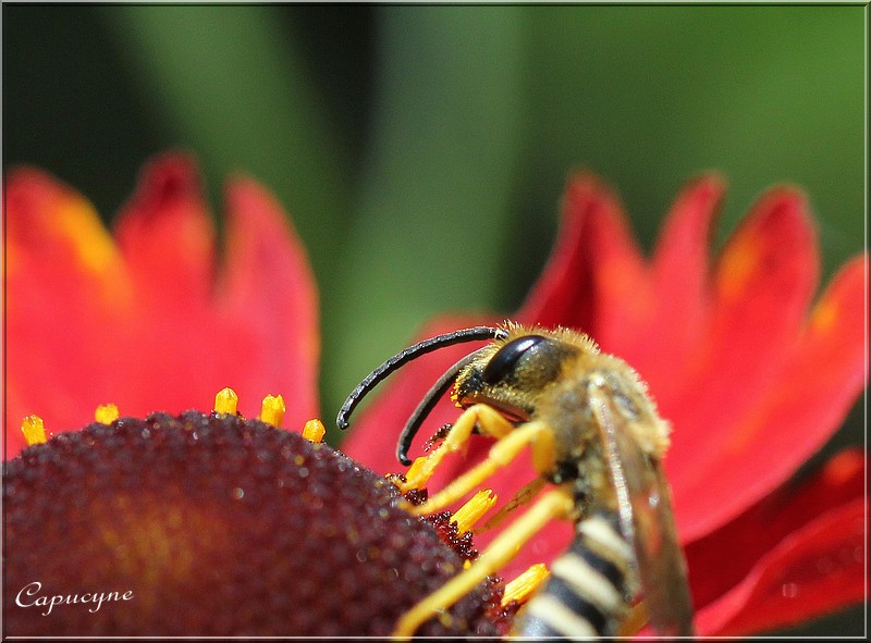 Un jardin sans pesticides...