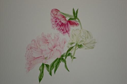 aquarelles botaniques 2