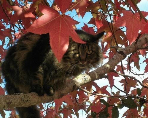 chat-d-automne-10.jpg