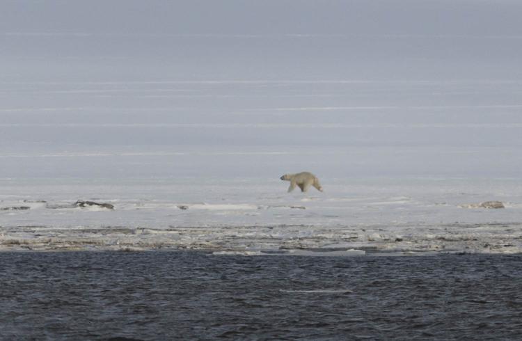 Les mésaventures de l'ours indésirable... suite