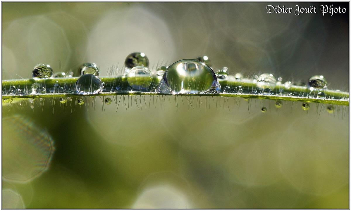 Goutte d'eau (6)