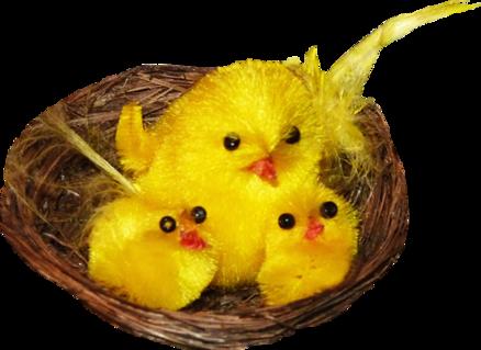 Pâques animaux divers 8