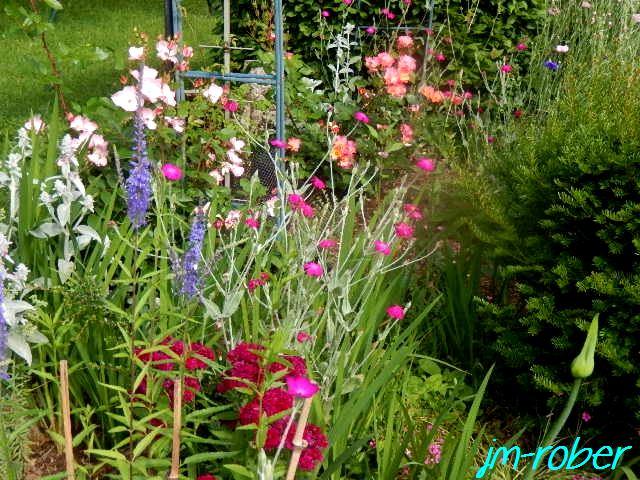 Quelques fleurs pour ce premier jour d'été 2016