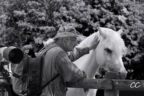 Cheval blanc