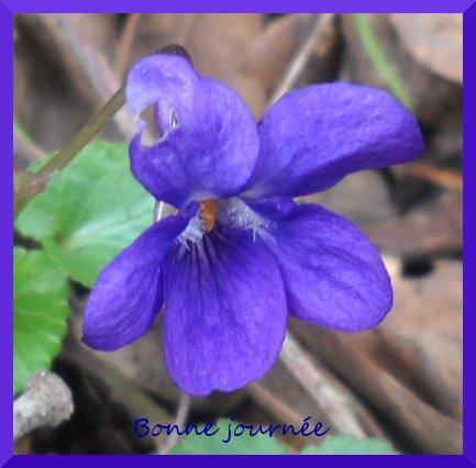 violettBJ