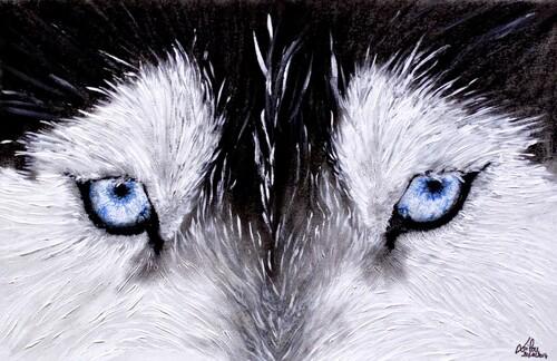 Le regard du chien-loup
