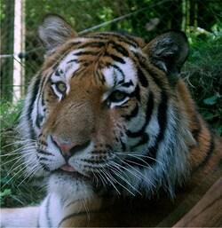 Safari Zoo de Thoiry...