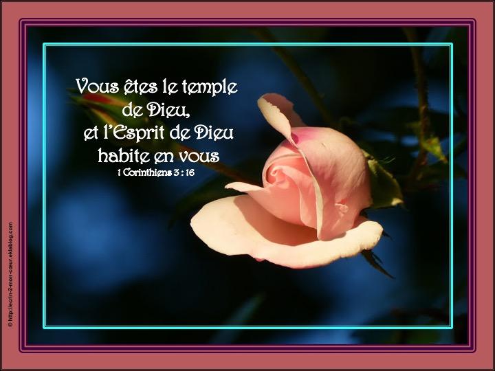 Vous êtes le temple de Dieu - 1 Corinthiens 3 : 16