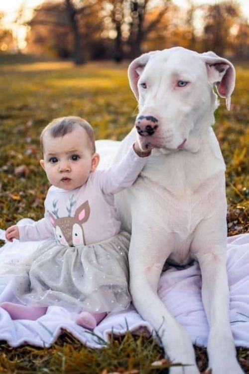 (-*♥*-) Cette chienne sourde et aveugle était sur le point d'être euthanasiée, mais cette famille a su reconnaître sa véritable valeur