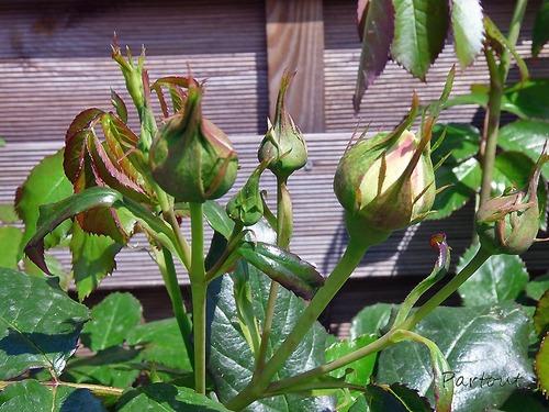 """INTERLUDE  """"JARDIN - MAI"""" côté fleurs"""